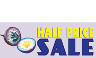 Half Price Sale Banner 1200