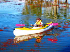 SHK 290 (Kayak / Canoe)