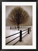 Solitude - David Lorenz Winston