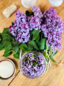 fresh lilac blossom tincture