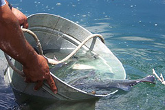 Fish Stocking Services