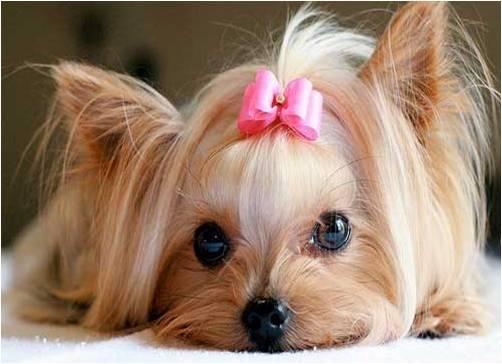 puppywithribbon.jpg