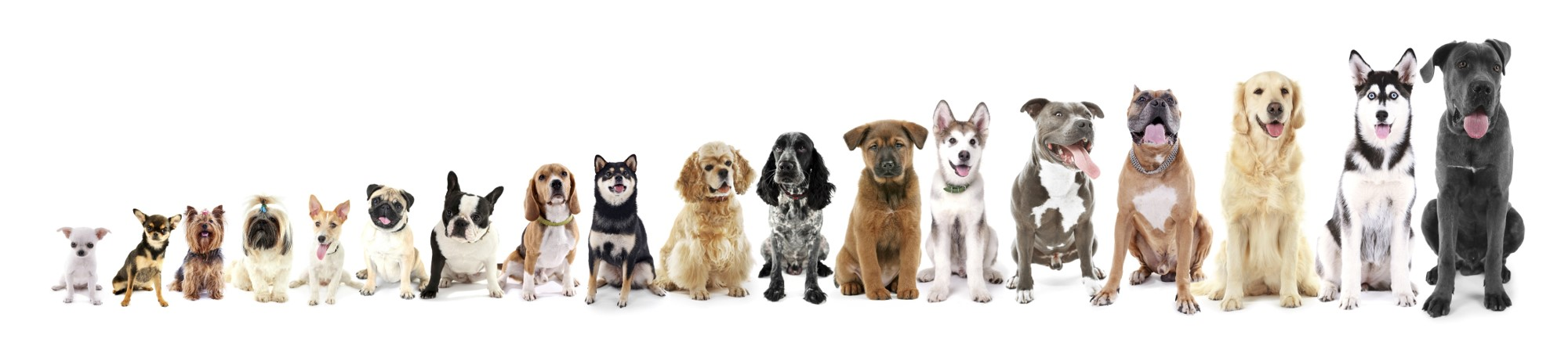 line-of-dogs-smaller.jpg