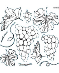 Iron Orchid Designs Grapes Stamp