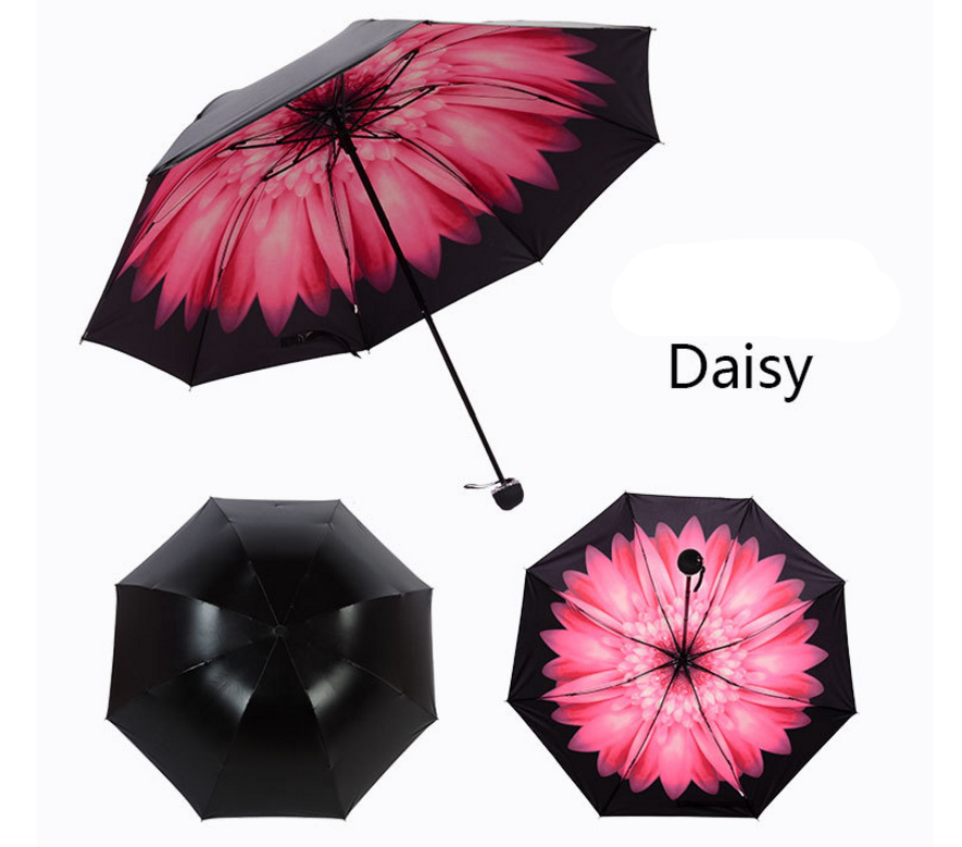 umbrella-dasiy.png