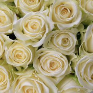 One Dozen Traditional White Roses