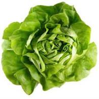 LETTUCE BUTTERHEAD- Each (Veggie Patch, Chemical Free)
