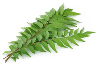 CURRY LEAVES - 5 Stems (Virtue Farm, Chemical Free)