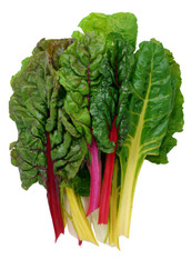 RAINBOW CHARD- Bunch