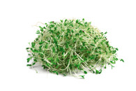 ALFALFA Sprouts - 125g Punnet