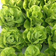 BABY COS LETTUCE  *CF (SORRY NOT AVAIL UNTIL FEB)