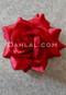 red hair flower