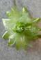 lime green hair flower