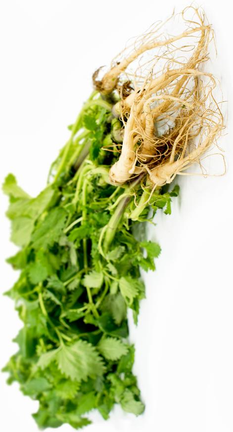 nette root
