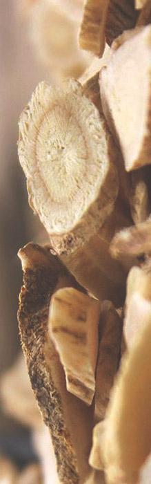 astragalus-natural-antiviral.jpg