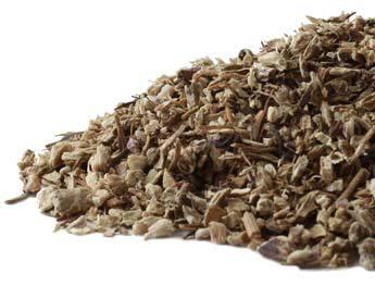 echinaceaangustifolia-root-herbosophy-ra.jpg