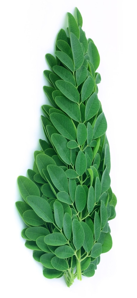 moringa-leaves.jpg