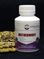 Motherwort loose herb, powder or capsules @ Herbosophy