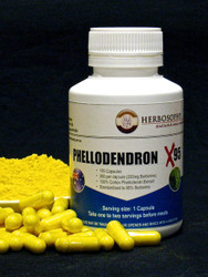 Phellodendron Berberine powder or capsules @ Herbosophy