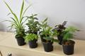 "4"" Tropical Plant"