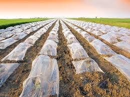 Plastic Greenhouse Strawberries photo by Zeljko Radojko