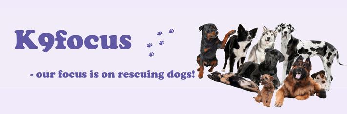 K9 Focus Dog Rescue