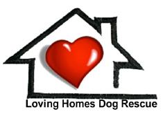 Loving Homes Dog Rescue