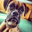 Dog Dog Tag
