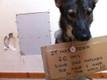 Identification Dog Tag