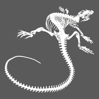 image-free-vector-freebie-lizard-skeleton-tail
