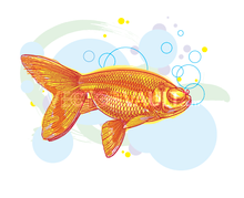 image buy vector goldfish illustration