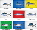"Taylor Made - Blue Marlin Flag, 36"" x 60"" (1922)"