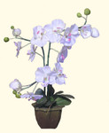 Silk White orchid with pot