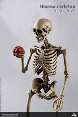 COOMODEL BS011 1/6 THE HUMAN SKELETON (DIECAST ALLOY)