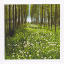 Dandelions In The Sun photography Card