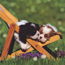 Two Puppies Greeting Card - NGS