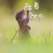 Squirrel Greeting Card - NGS