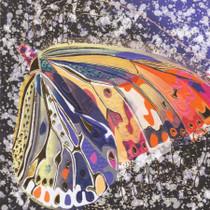 Birthday Card - Butterfly - Camden Graphics