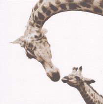 WWF - Giraffe Card