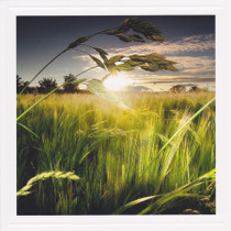 Grass Sunset photography Card