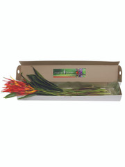 Heliconia 50 Stem Box (shipping included)