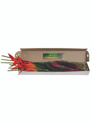Mixed Tropical Box - 1 (shipping included)