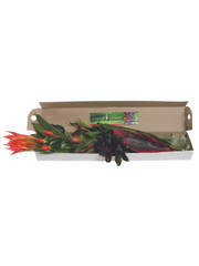 Mixed Tropical Box - 2 (shipping included)