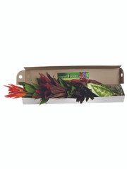 Mixed Tropical Box - 5 (shipping included)