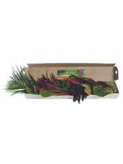 Mixed Tropical Box - 6 (shipping included)