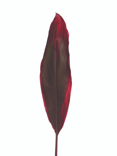Rubra Red