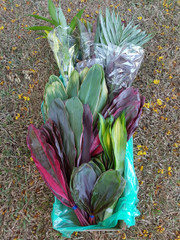 Jumbo Mixed Foliage (shipping included)