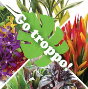 Mixed Tropical Box 13 - Go Troppo! (shipping included)
