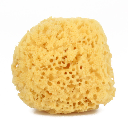 Sea Sponge Basin