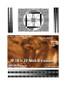 3D Fake Sonogram 18 to 23 Weeks